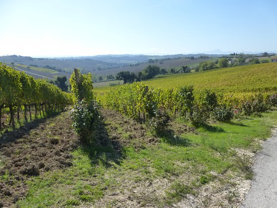Monte San Vito, Италия: panorama dal piazzale dello spaccio della cantina