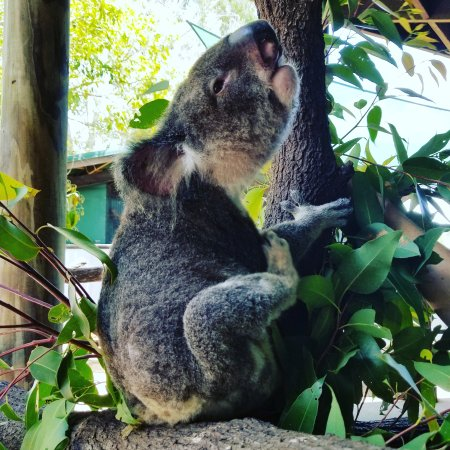Wildlife Habitat Port Douglas: IMG_20171013_201034_464_large.jpg