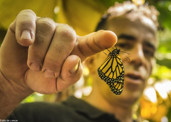 Puerto Naos, Spanyol: a butterfly that just came out of the cocoon