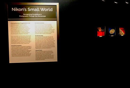 Greenwich, CT: Nikon Small World, July 29, 2017 - October 29, 2017