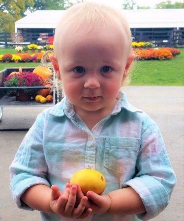 Channahon, Ιλινόις: Cute little pumpkins!
