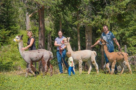 Tiroler Bio Alpakas