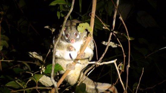 Yungaburra, Australie : 27 september