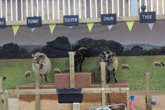 Guiting Power, UK: some of the goats from goat talk