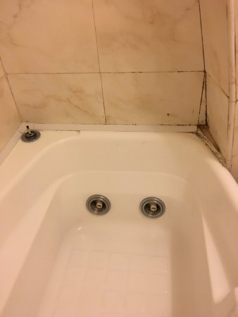 Hotel 2000 Roma: The mold in the bathroom that one could see when entering