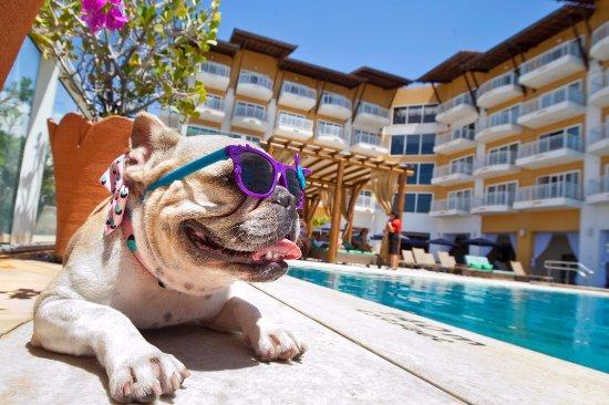 Hotéis pet friendly, viajar com animal de estimação não é mais um problema