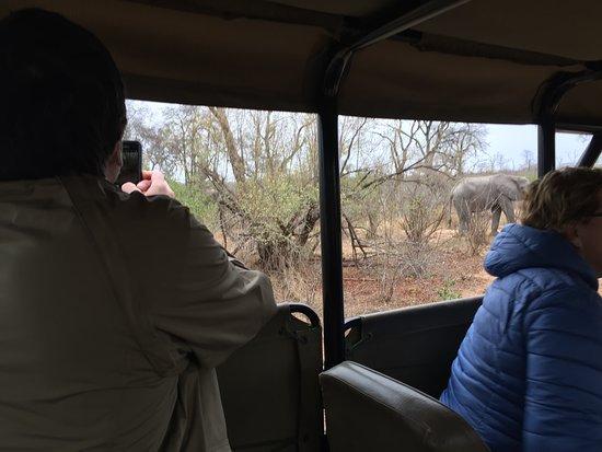 Национальный парк Крюгера, Южная Африка: Last major sighting of the trip - a herd of elephants that blocked the road/surrounded our vehic