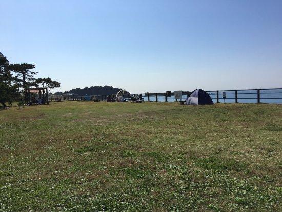 Hayama Park: 公園の芝生