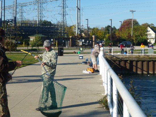 Port Washington, WI: He caught a large Rainbow Trout in the harbor