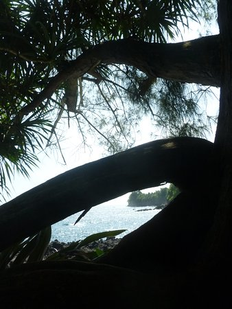 Papaikou, Hawái: Many different views of the beautiful shoreline and foliage