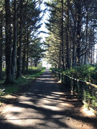 Tillamook, Oregón: Pathing from the parking lot down to the light house