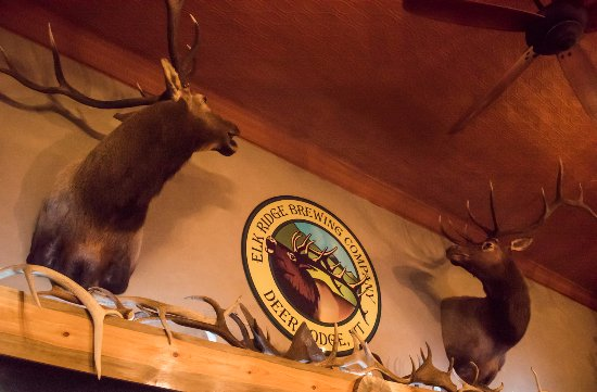 Deer Lodge, MT: Above the bar, where many Elks are displayed. Most are from friends and family.