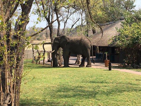 Arathusa Safari Lodge: photo2.jpg