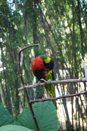 Riverbanks Zoo Picture Of Riverbanks Zoo And Botanical Garden Columbia Tripadvisor