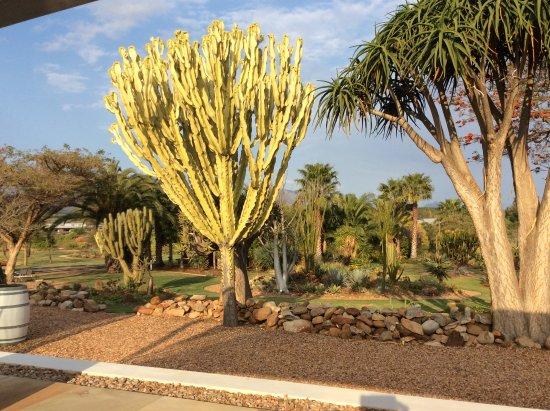 Robertson, Güney Afrika: Garden from the restaurant terrace