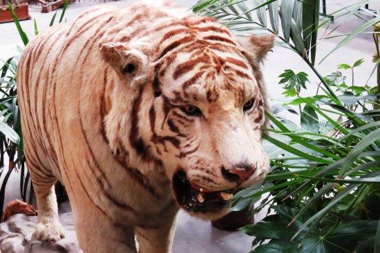 Murazzano, İtalya: Tiger
