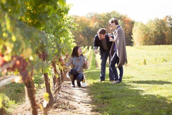 Beamsville, Canada: Vineyard tour