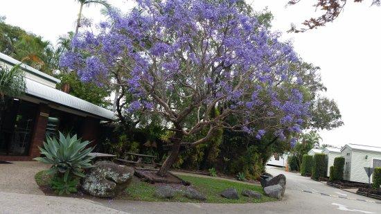 Colonial Village Taigum: Gorgeous jacaranda ne reception. Lively tropical  gardens & birds