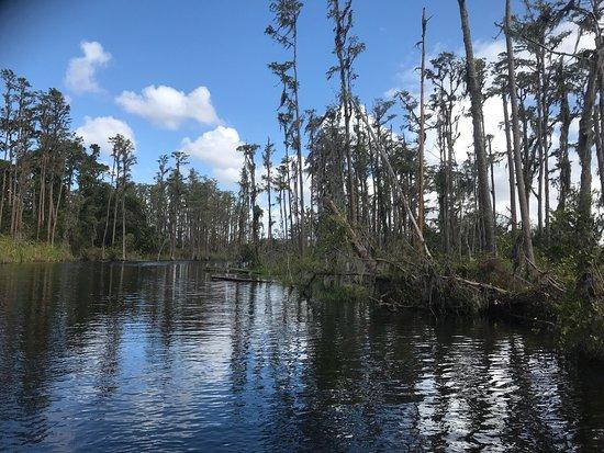Windermere, FL: photo6.jpg