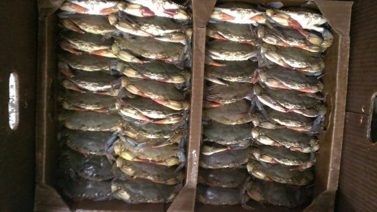 Captain Trey's Crabs & Seafood: Soft Crabs