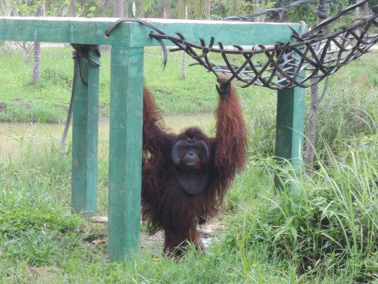 East Kalimantan, Indonesia: photo0.jpg