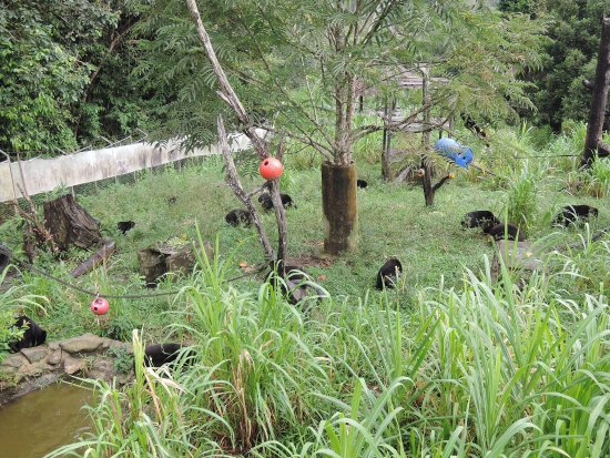 East Kalimantan, Indonesia: photo7.jpg