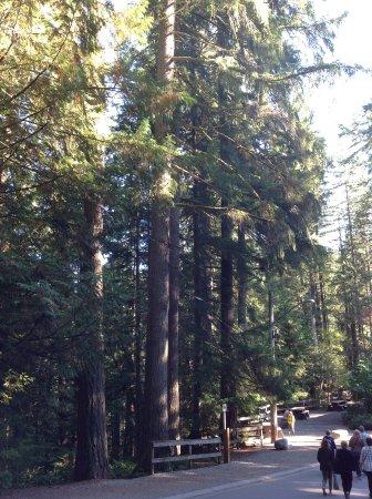 นอร์ทแวนคูเวอร์, แคนาดา: Stupendous trees!