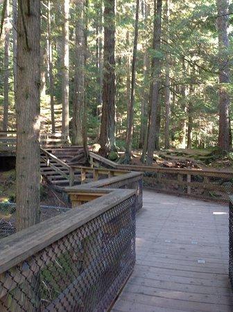نورث فانكوفر, كندا: GREAT wooden paths to take, at least initially.