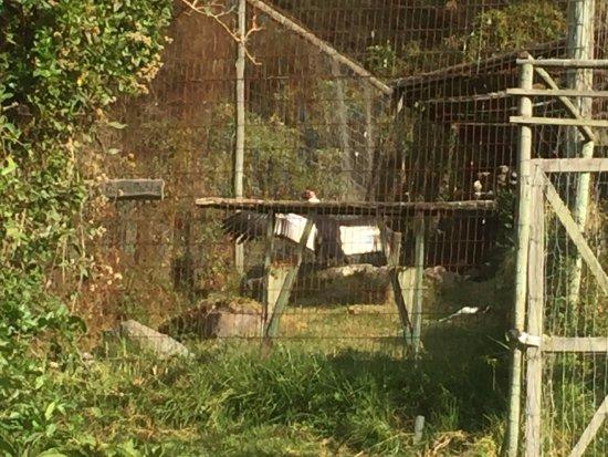 Imbabura Province, Ecuador: Condor en cautividad