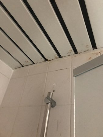 Anderlecht, Bélgica: Mould on bathroom ceiling - located within the walk-in shower