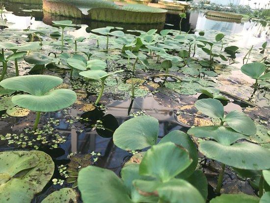 Orto Botanico di Padova: photo7.jpg