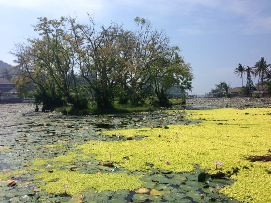 Candidasa, Indonesia: Lotus pond