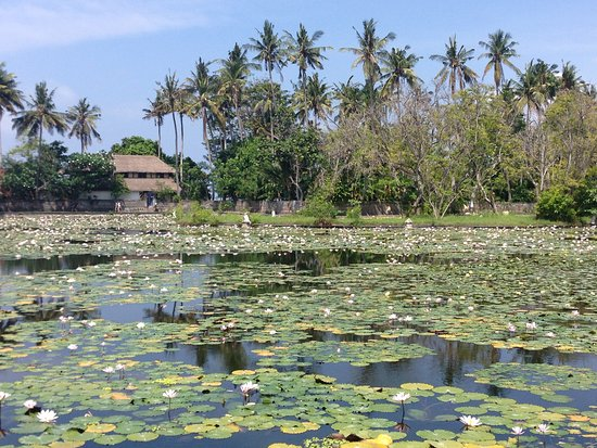 Candidasa, Indonesia: Lotus and palms