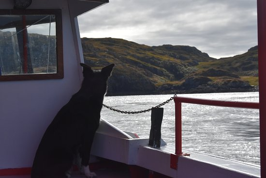Lochinver, UK: Molly the first mate