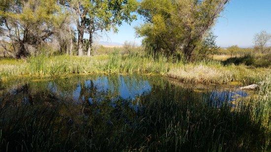 Sierra Vista, AZ: The pond outside the ranch