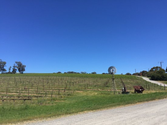 McLaren Vale, أستراليا: View from Oliver's Taranga Vineyards, one of the five wineries we visited on the tour.