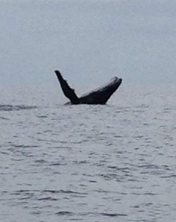 Urangan, Australia: Breaching whale awesome.