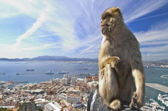 Gibraltar Full Day Tour från Sevilla