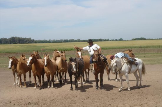 Ranch trip with private driver