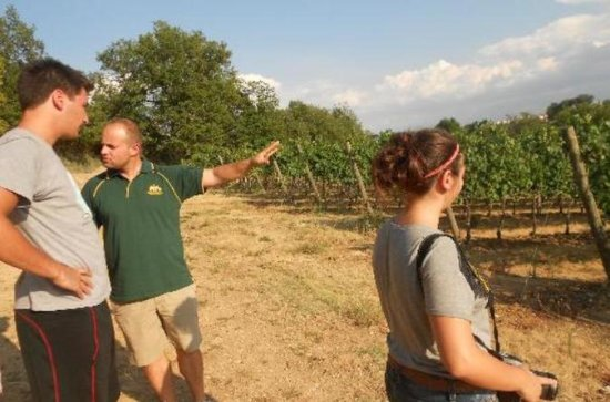 Emotional Winery and Oil mill Tour in...