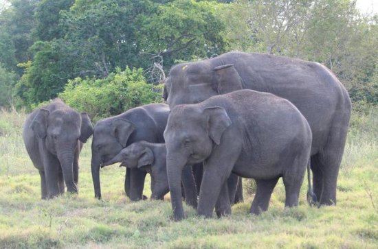 2 Day Private Tour - Wildlife & World Heritage Tour from Galle