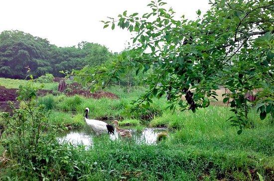 Japansk Red-Crowned Crane Observation...