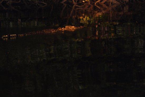 Daintree, Australia: Scarface the croc