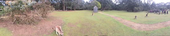 Taranna, Avustralya: photo0.jpg