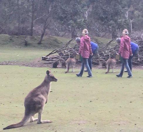 Taranna, Avustralya: photo1.jpg