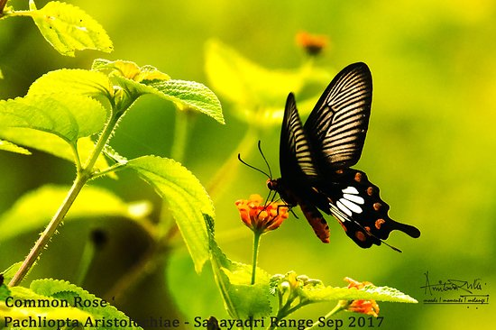 Koyna Wildlife Sanctuary