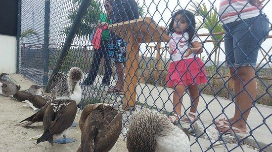 Manglaralto, Ecuador: 20171008_124441_large.jpg