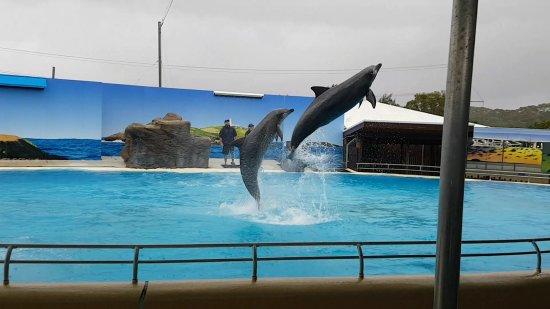 Pet Porpoise Pool - Dolphin Marine Magic: Screenshot_20171014-161828_large.jpg