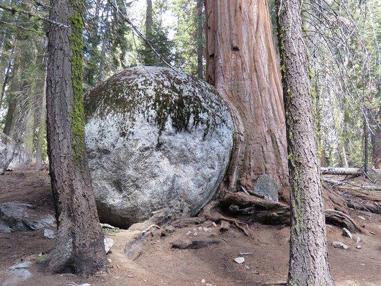 Three Rivers, Καλιφόρνια: Sequoya Tree swallows a rock