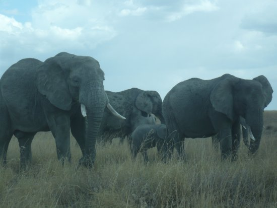 Lake Manyara National Park, Tanzania: elephants of lake manyara